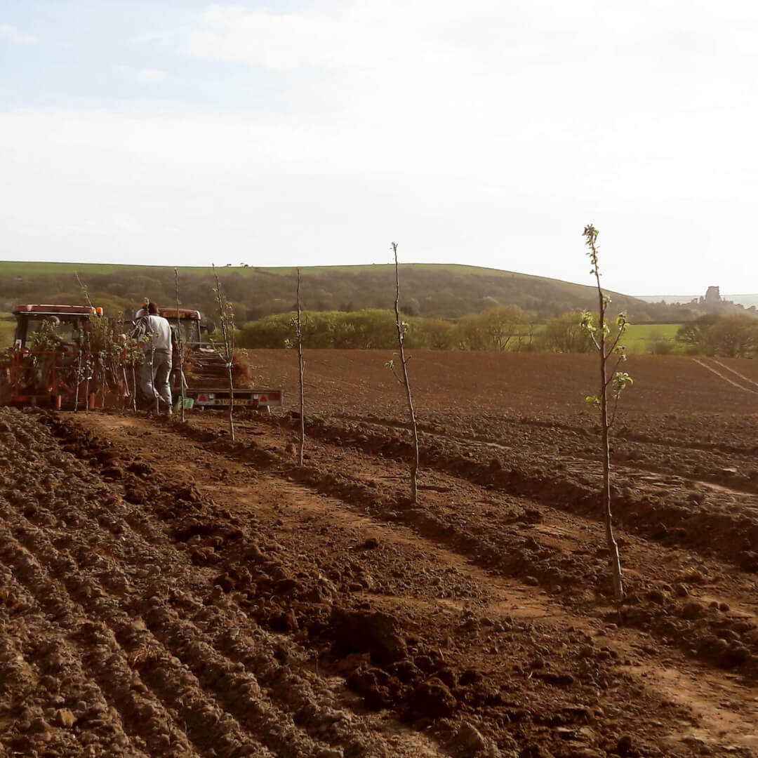 Our new orchard